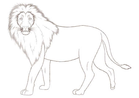 lion Ilustração
