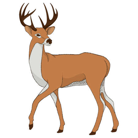 reindeer Reklamní fotografie - 79152466