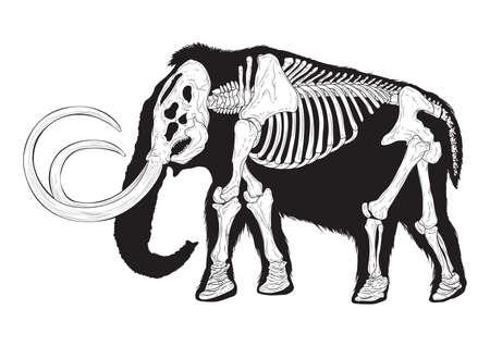 mammoth Ilustrace