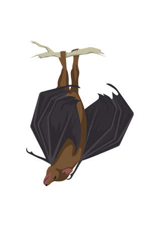 upside down bat Ilustrace