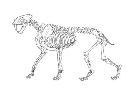 saber-toothed cat Illustration