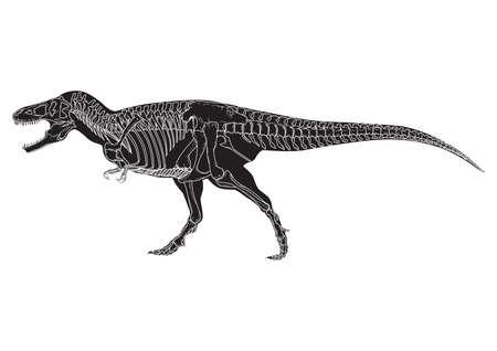 ティラノサウルス ・ レックス  イラスト・ベクター素材