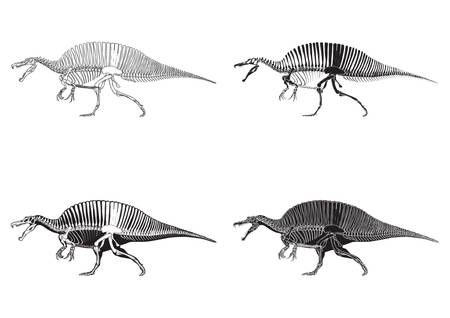 set of spinosaurus icons Illustration