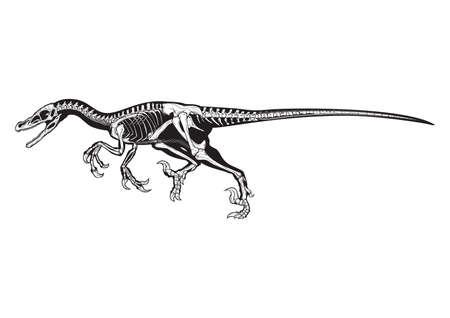 アロサウルス  イラスト・ベクター素材