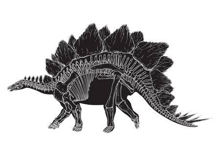 stegosaurus Ilustrace