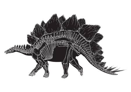 stegosaurus Illustration