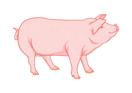 pig Imagens - 79213982