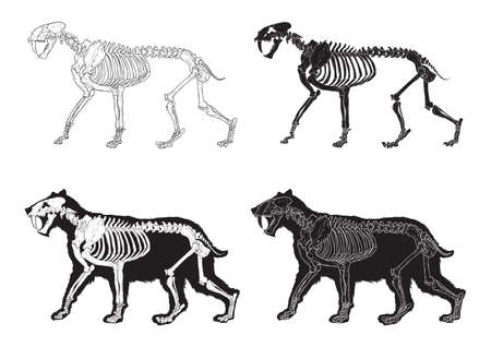 set of saber-toothed cat icons Çizim