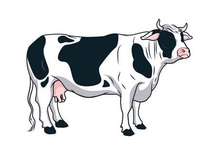 cow Imagens - 79214106