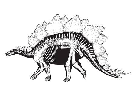 ステゴサウルス  イラスト・ベクター素材