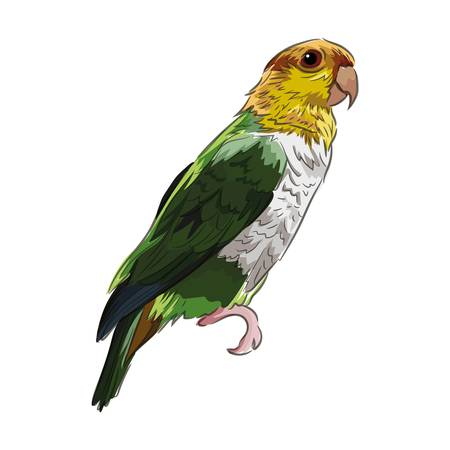 parrot Çizim
