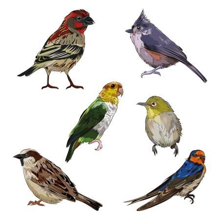 set van vogel pictogrammen Stock Illustratie