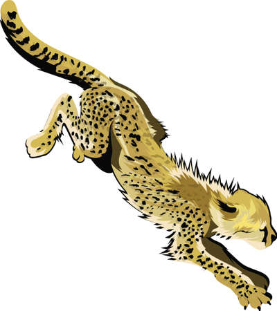 crouch: cheetah Illustration