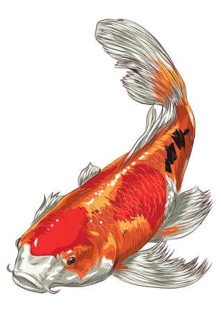 잉어 물고기 일러스트