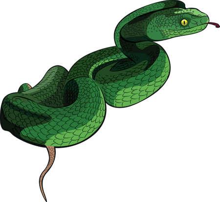 뱀 일러스트