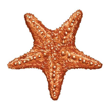 estrellas de mar  Ilustración de vector