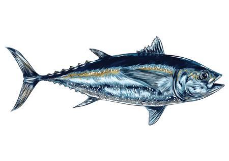 tuna fish Stock Vector - 79214520