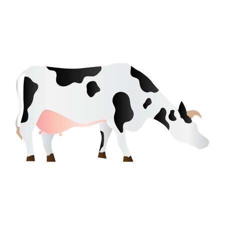 cow Reklamní fotografie - 79163183