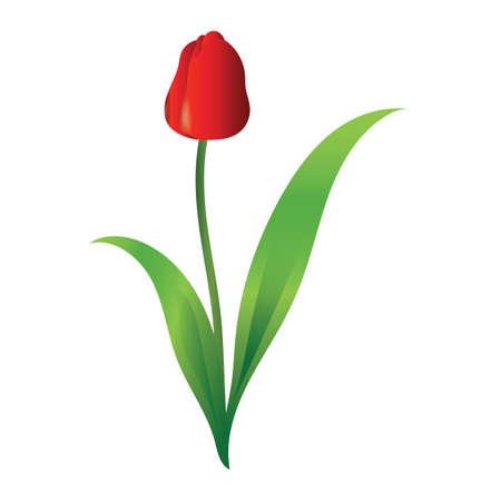 tulips Çizim