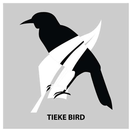 tieke bird
