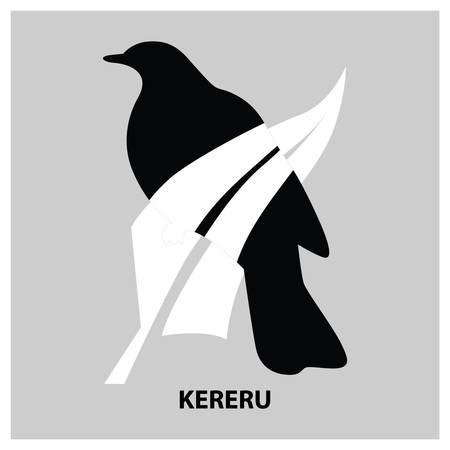 kereru Illustration