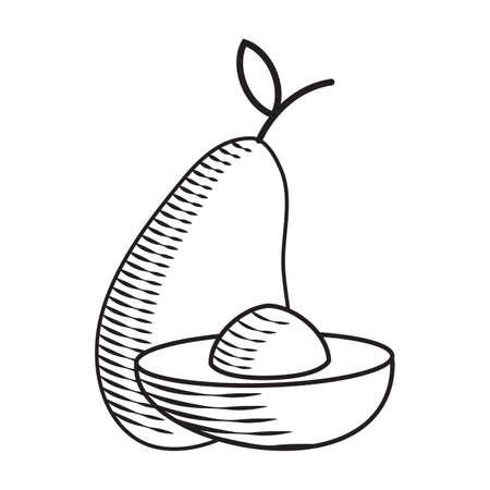 Avocado Stock Illustratie