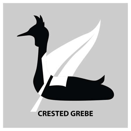crested grebe Illustration