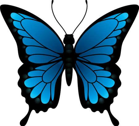 butterfly  illustration Ilustração