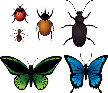昆虫コレクション  イラスト・ベクター素材