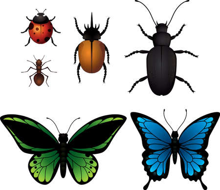 insect collection Illustration