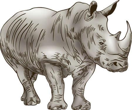 흰색 배경에 코뿔소