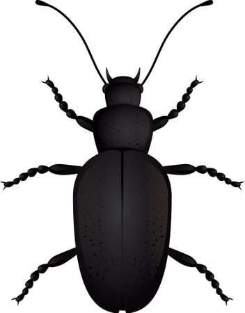 昆虫のカブトムシは分離されました。