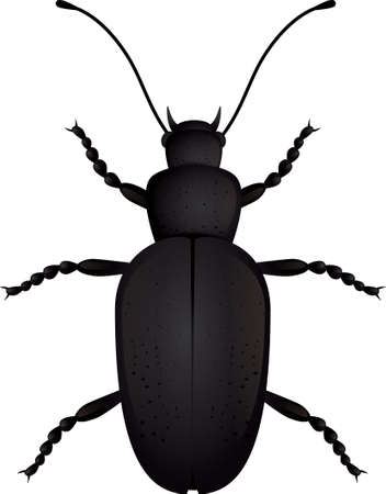 Insect beetle isolated.