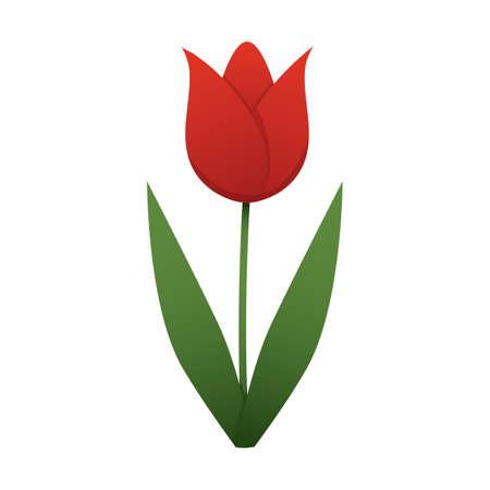 tulip Çizim