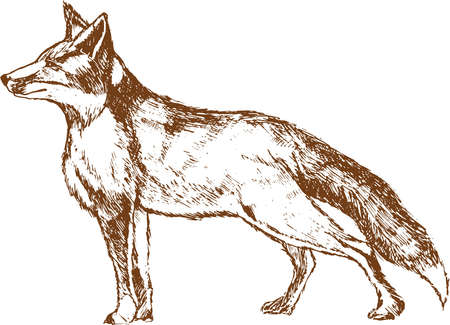 Wolf icon isolated