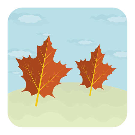 A pair of maple leaves