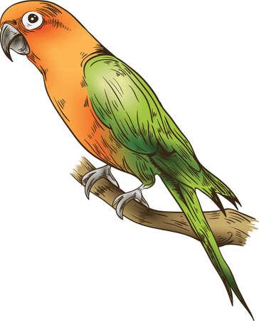 Papegaai pictogram geïsoleerd Stock Illustratie