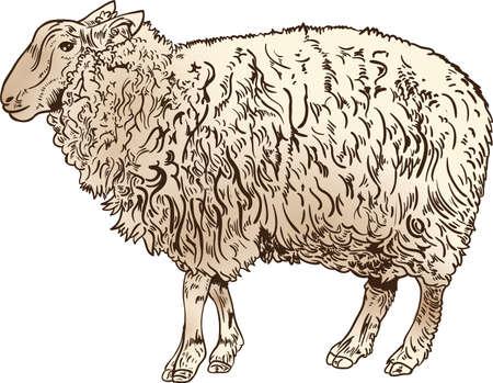 羊デザイン アイコン