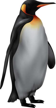 flightless: penguin Illustration