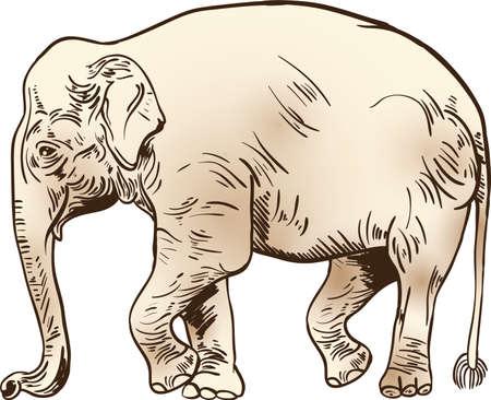 Elephant design Çizim