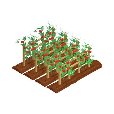 Vid de tomate