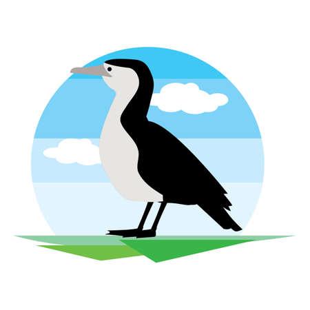 plummage: bird