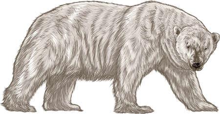polar bear Imagens - 79143998