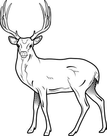 deer Reklamní fotografie - 79144006