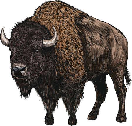 bison 일러스트