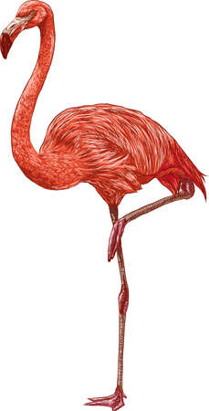 wading: flamingo