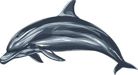 돌고래 일러스트