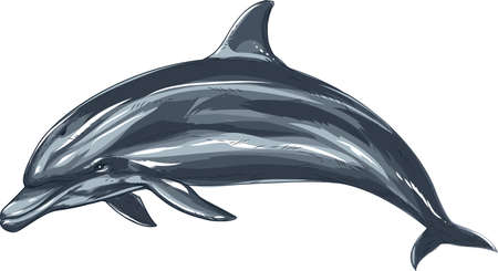 flippers: dolphin Illustration