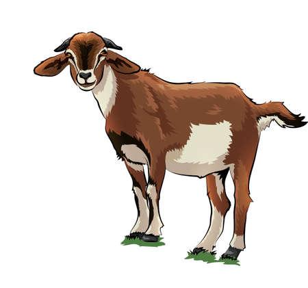 goat Imagens - 79144694