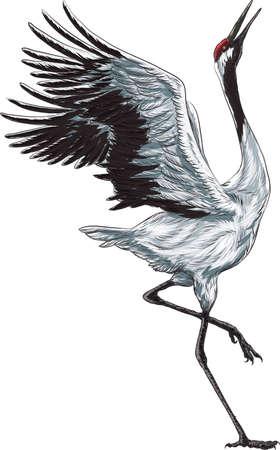 crane Illustration